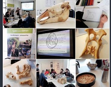 collage anatomie